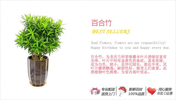 百合竹—快送鲜花网|绿植花卉|异地送花|网上送鲜花|盆栽花卉|办公室绿植|市内绿植