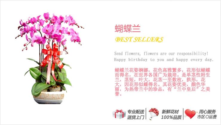 蝴蝶兰—快送鲜花网 绿植花卉 异地送花 网上送鲜花 盆栽花卉 办公室绿植 市内绿植